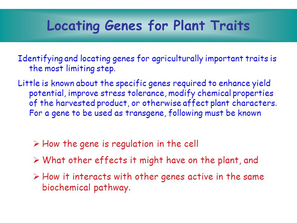 Locating Genes for Plant Traits