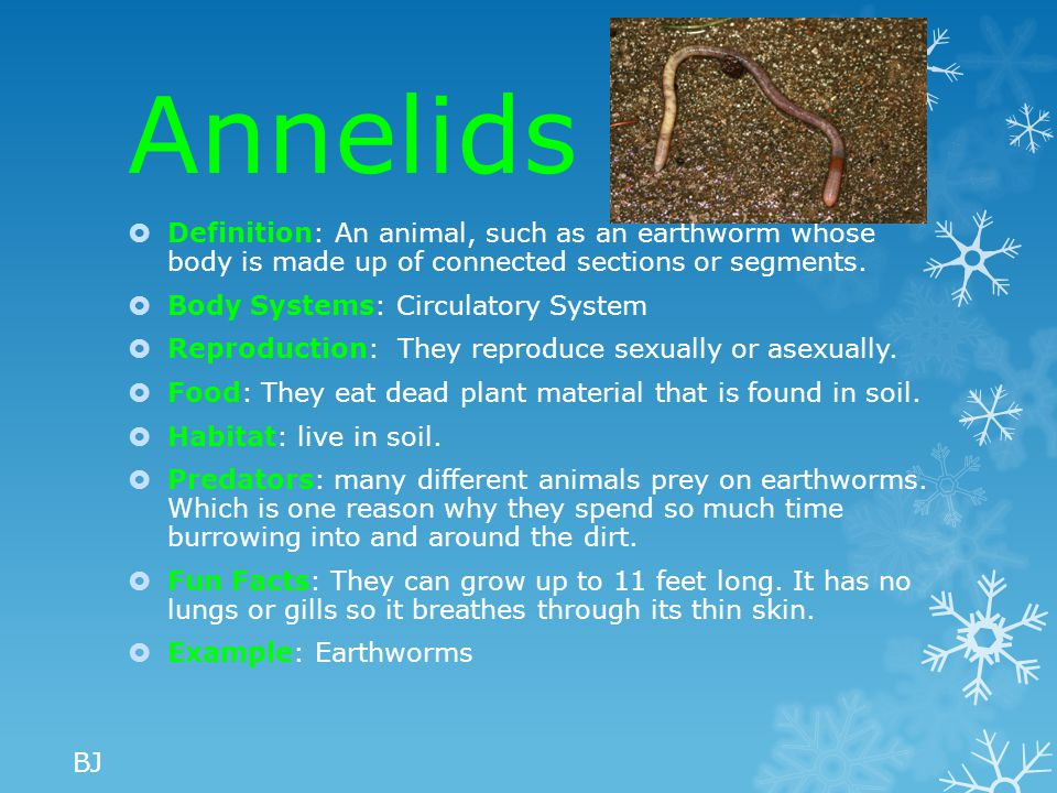Annelids Definition: An animal, such as an earthworm whose body is made up of connected sections or segments.