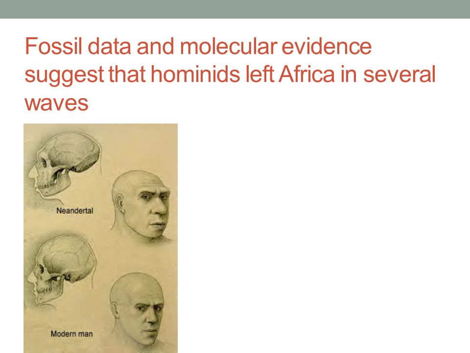 Fossil data and molecular evidence suggest that hominids left Africa in several waves map