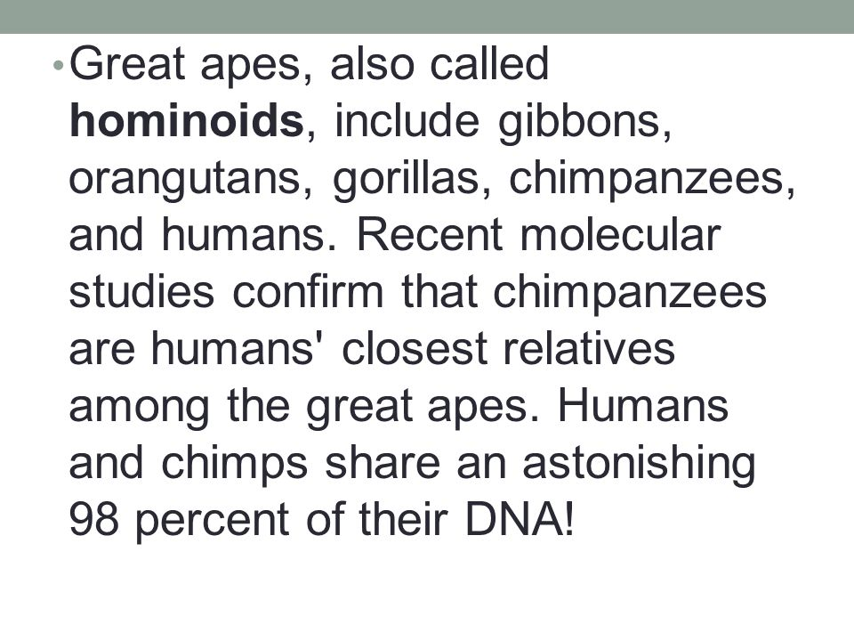 Great apes, also called hominoids, include gibbons, orangutans, gorillas, chimpanzees, and humans.