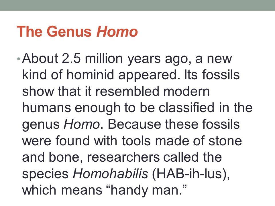 The Genus Homo