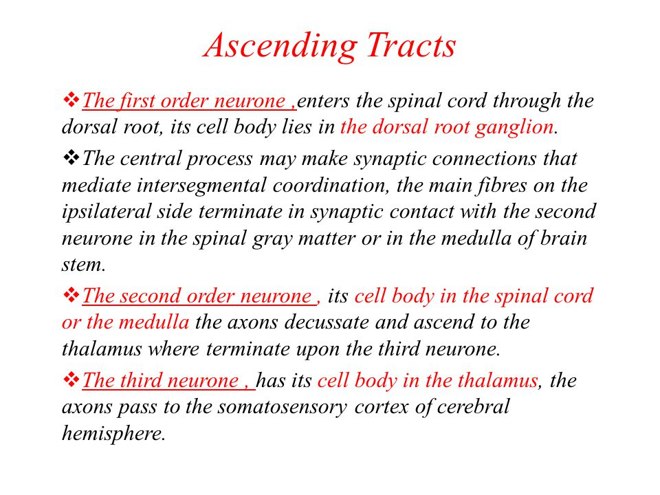 Ascending Tracts The first order neurone ,enters the spinal cord through the dorsal root, its cell body lies in the dorsal root ganglion.