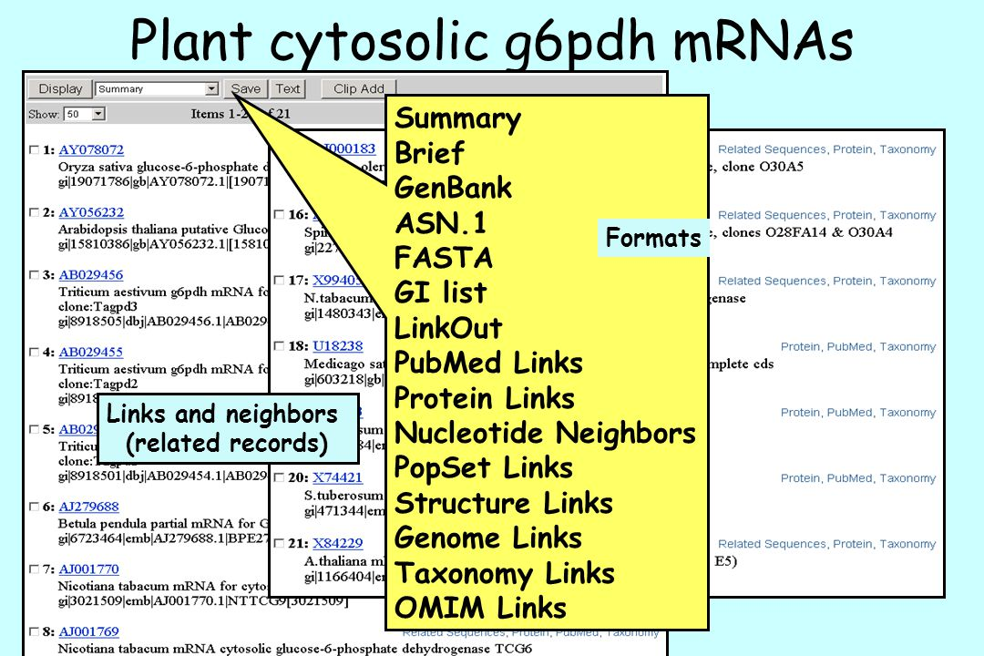 Plant cytosolic g6pdh mRNAs
