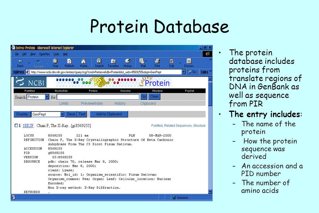 Protein Database The protein database includes proteins from translate regions of DNA in GenBank as well as sequence from PIR.