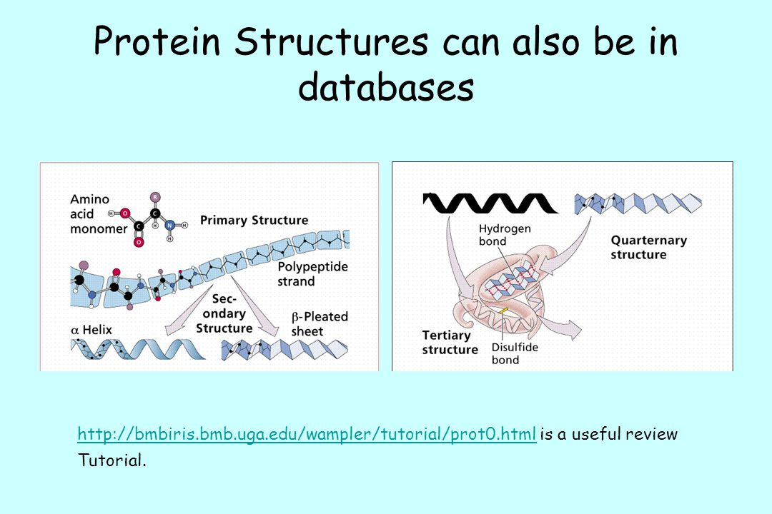 Protein Structures can also be in databases