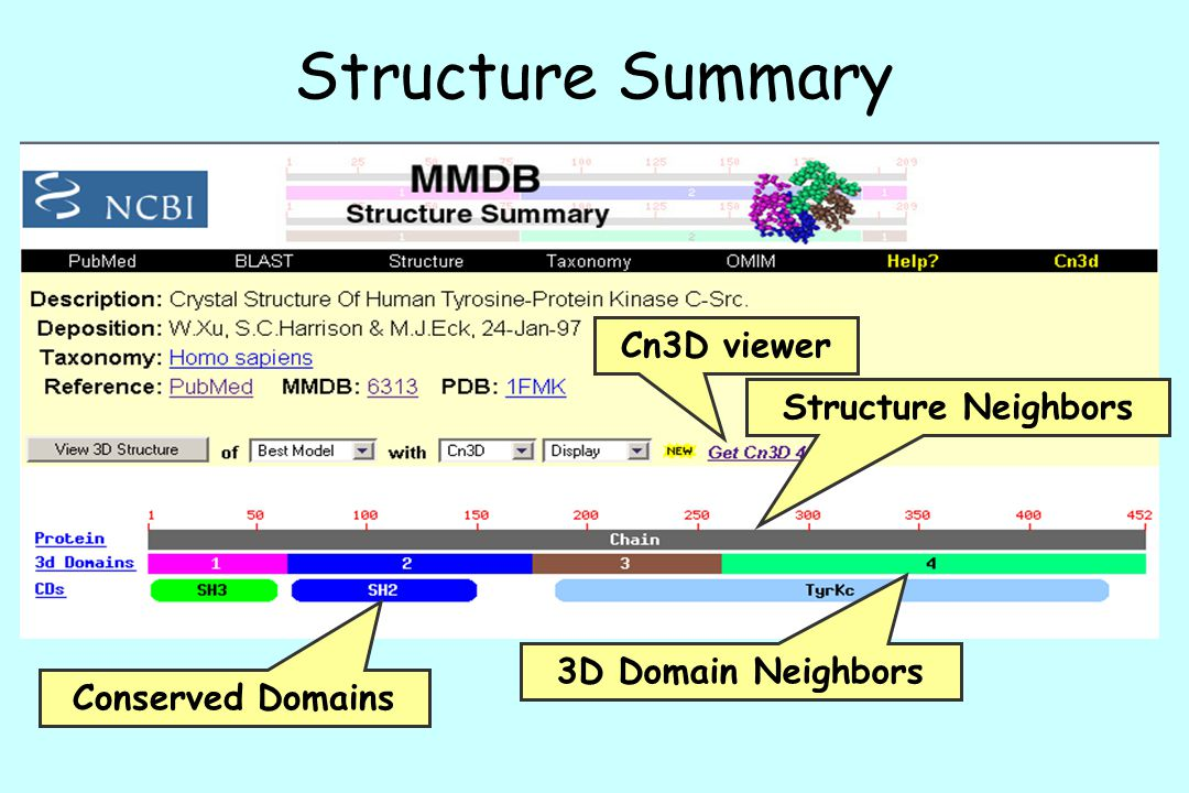 Structure Summary Cn3D viewer Structure Neighbors 3D Domain Neighbors