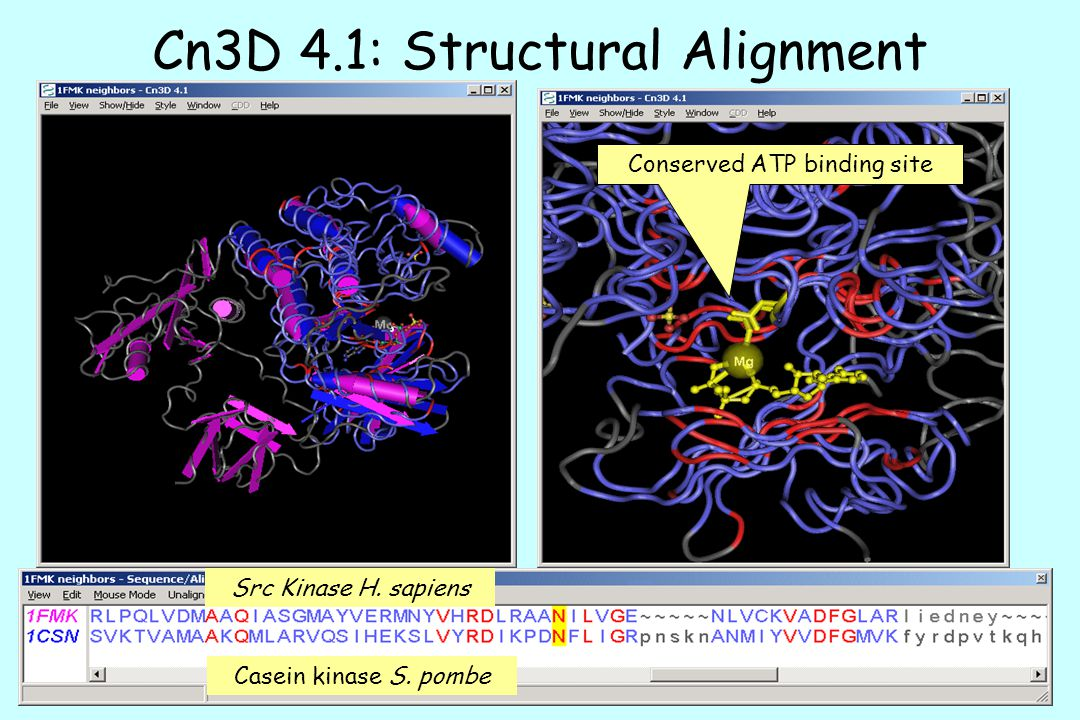 Cn3D 4.1: Structural Alignment