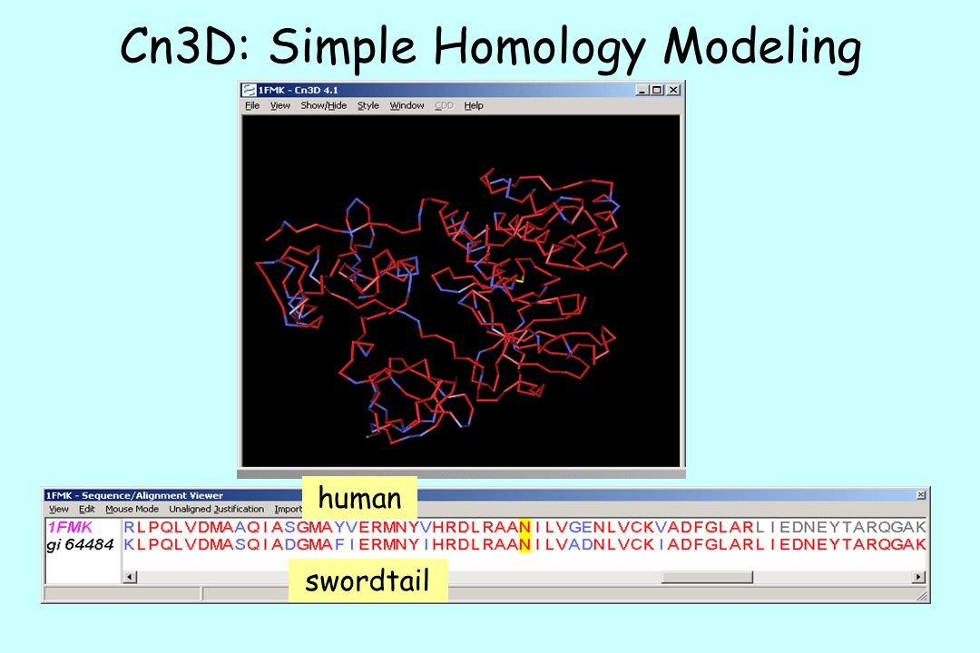 Cn3D: Simple Homology Modeling