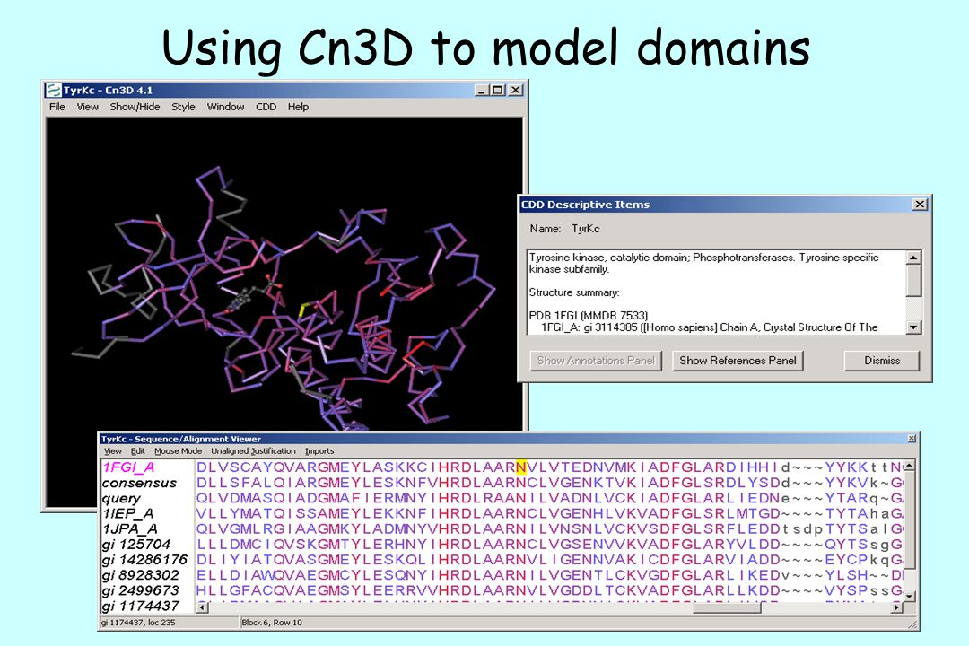 Using Cn3D to model domains