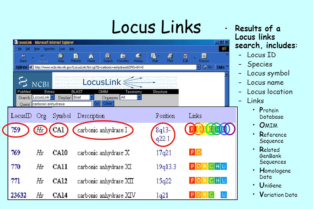 Locus Links Results of a Locus links search, includes: Locus ID