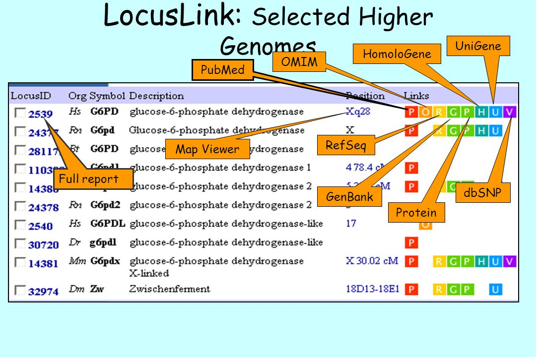 LocusLink: Selected Higher Genomes