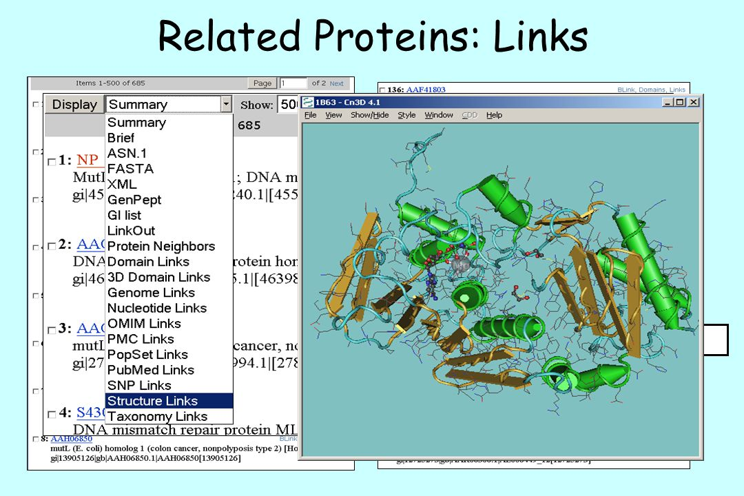 Related Proteins: Links