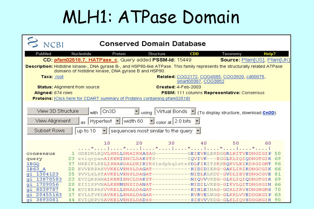 MLH1: ATPase Domain