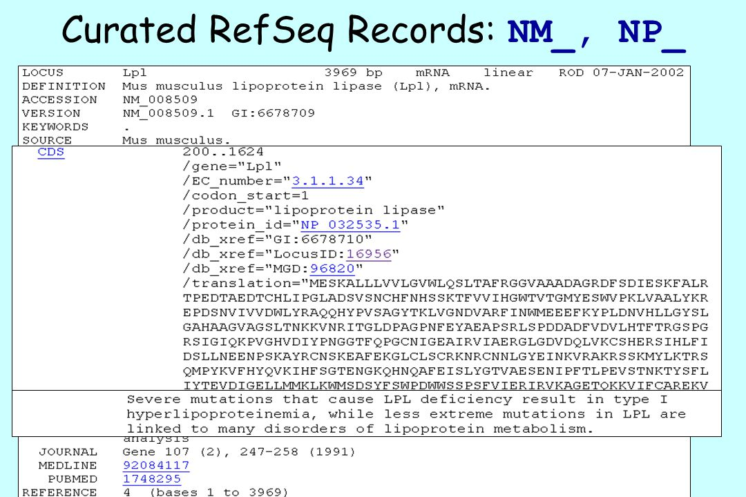 Curated RefSeq Records: NM_, NP_