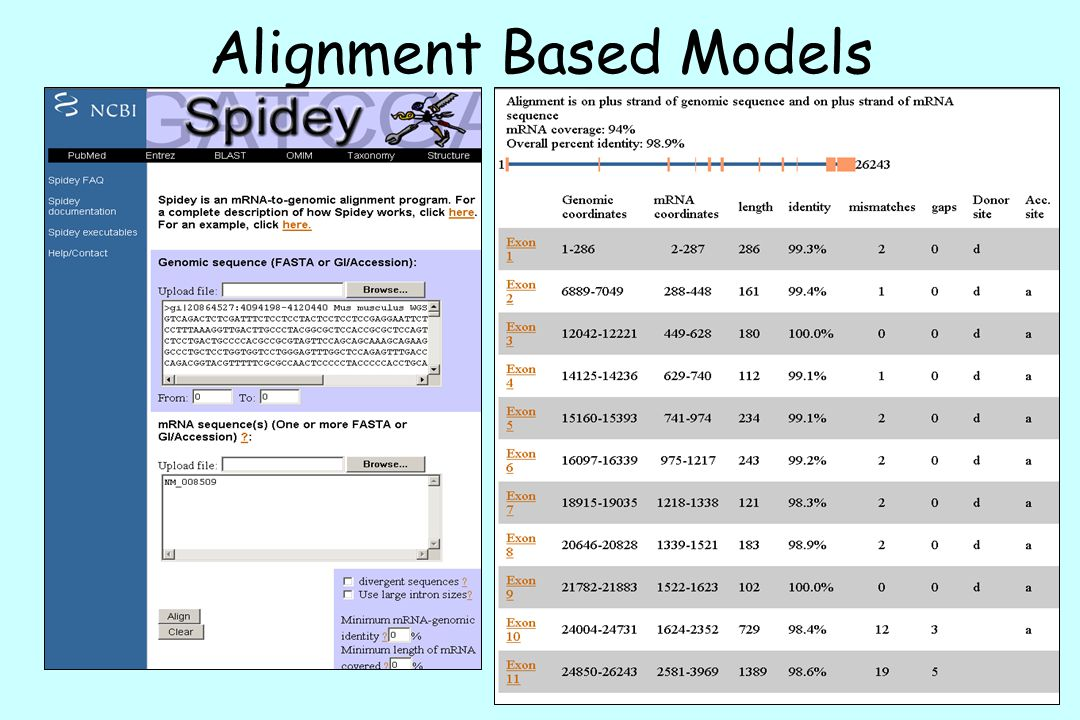 Alignment Based Models