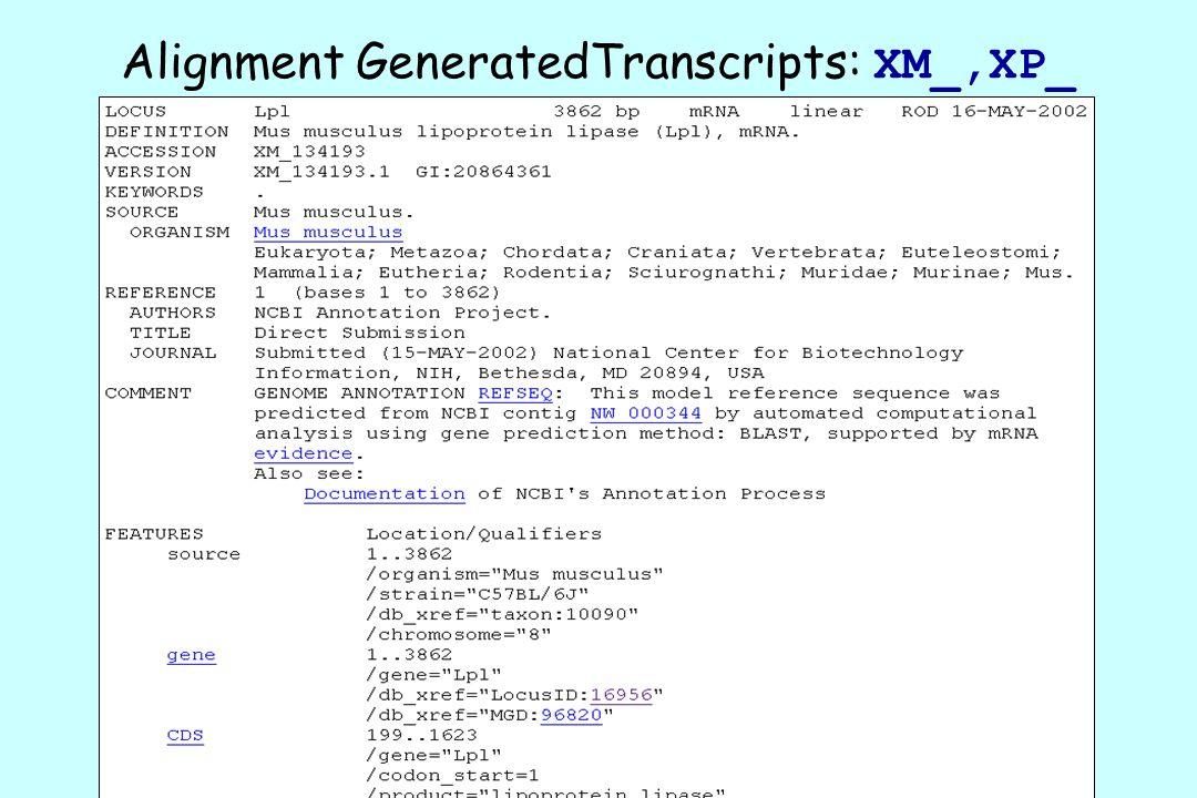 Alignment GeneratedTranscripts: XM_,XP_