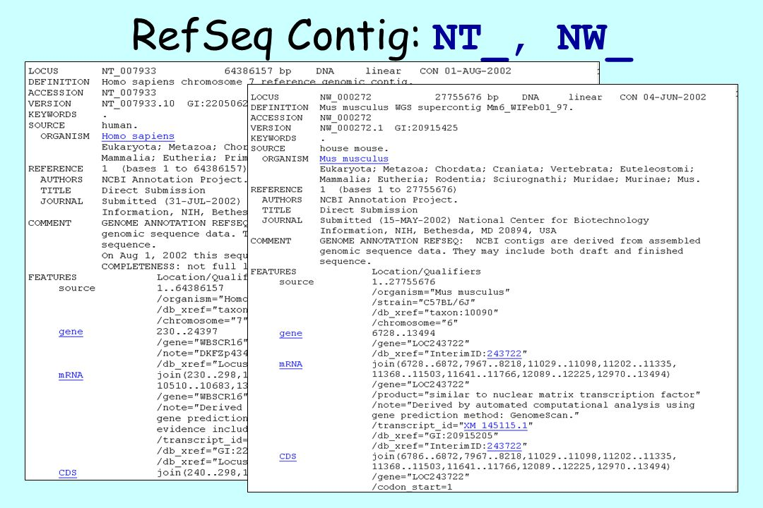 RefSeq Contig: NT_, NW_
