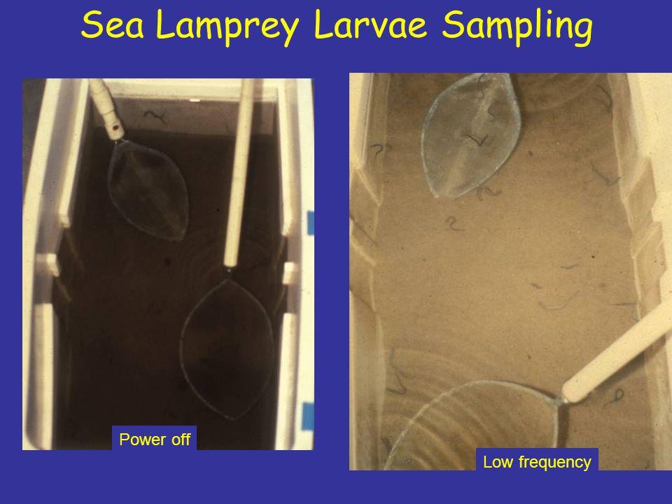 Sea Lamprey Larvae Sampling