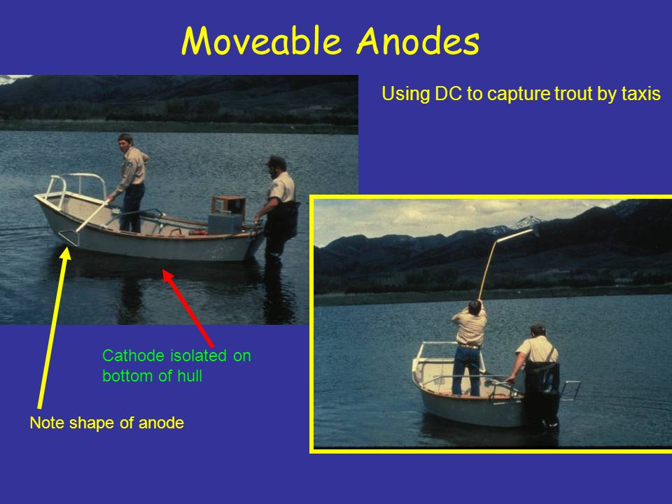 Moveable Anodes Using DC to capture trout by taxis