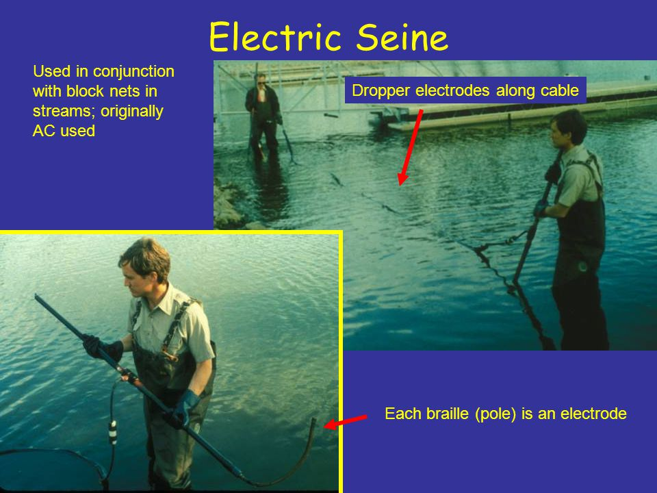Electric Seine Used in conjunction with block nets in streams; originally AC used. Dropper electrodes along cable.