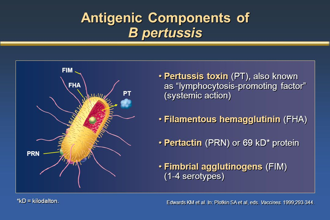 Antigenic Components of B pertussis