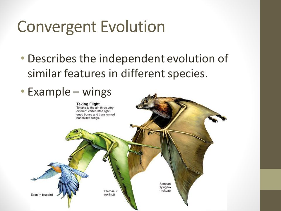 Convergent Evolution Describes the independent evolution of similar features in different species.