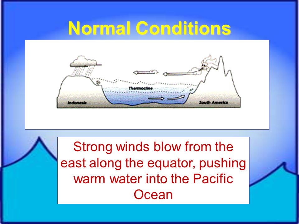Normal Conditions Strong winds blow from the east along the equator, pushing warm water into the Pacific Ocean.