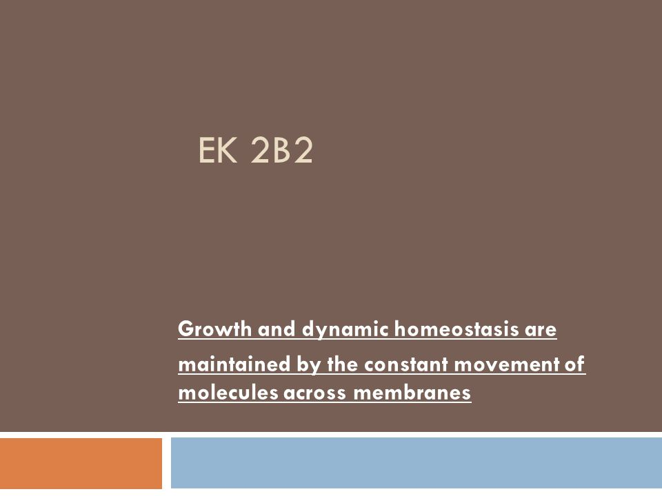 EK 2B2 Growth and dynamic homeostasis are