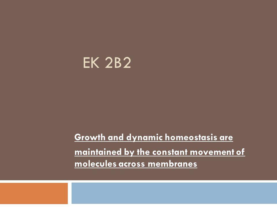 EK 2B2 Growth and dynamic homeostasis are