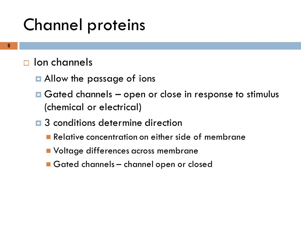 Channel proteins Ion channels Allow the passage of ions