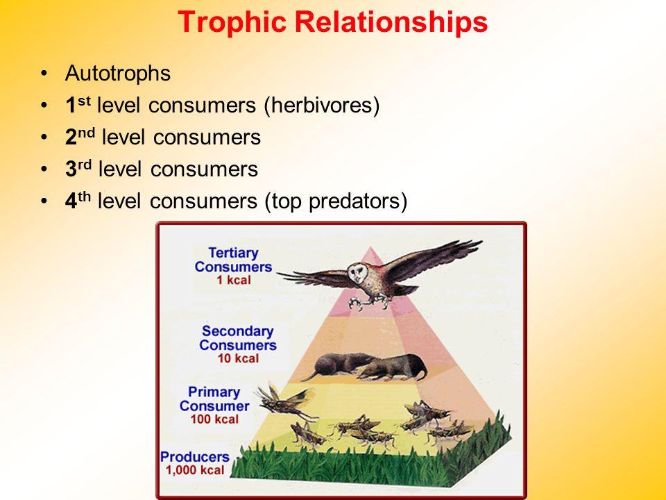 Trophic Relationships