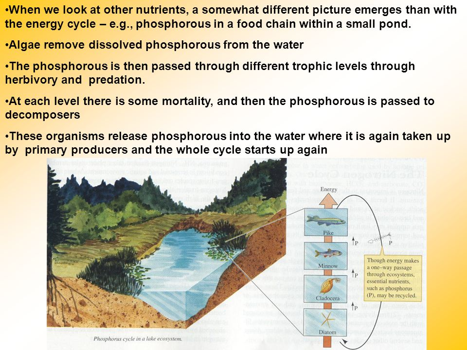 Algae remove dissolved phosphorous from the water