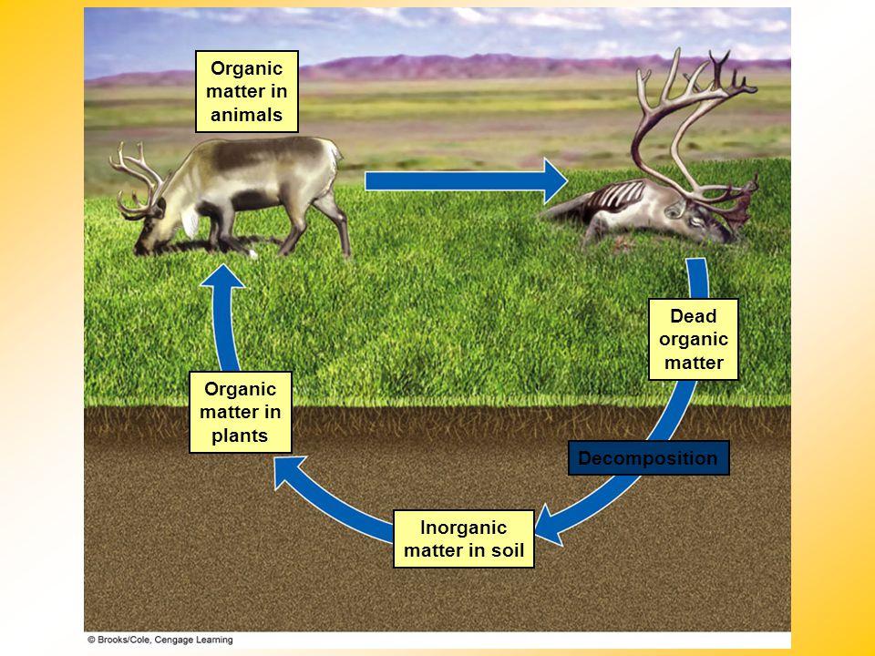 Organic matter in animals Dead organic matter Organic matter in plants