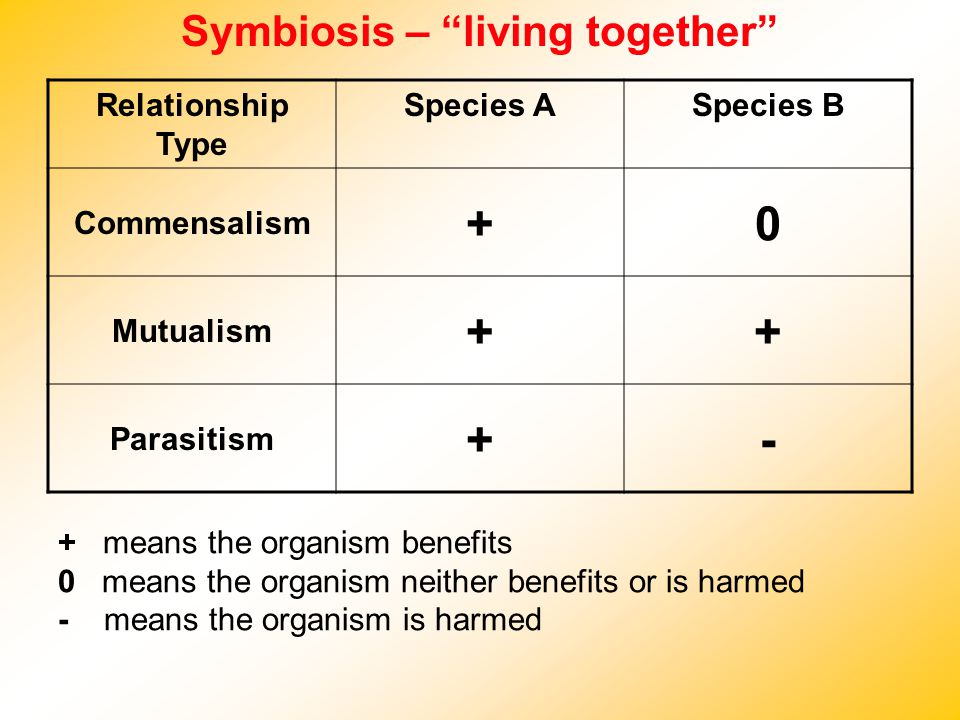 Symbiosis – living together