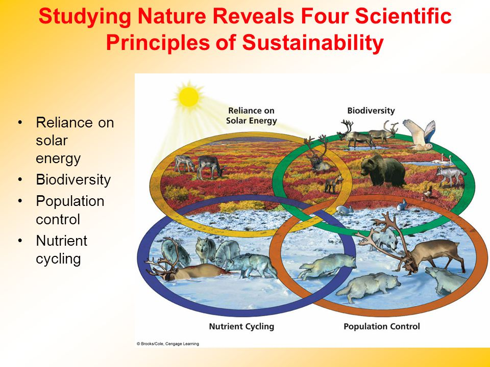 Studying Nature Reveals Four Scientific Principles of Sustainability