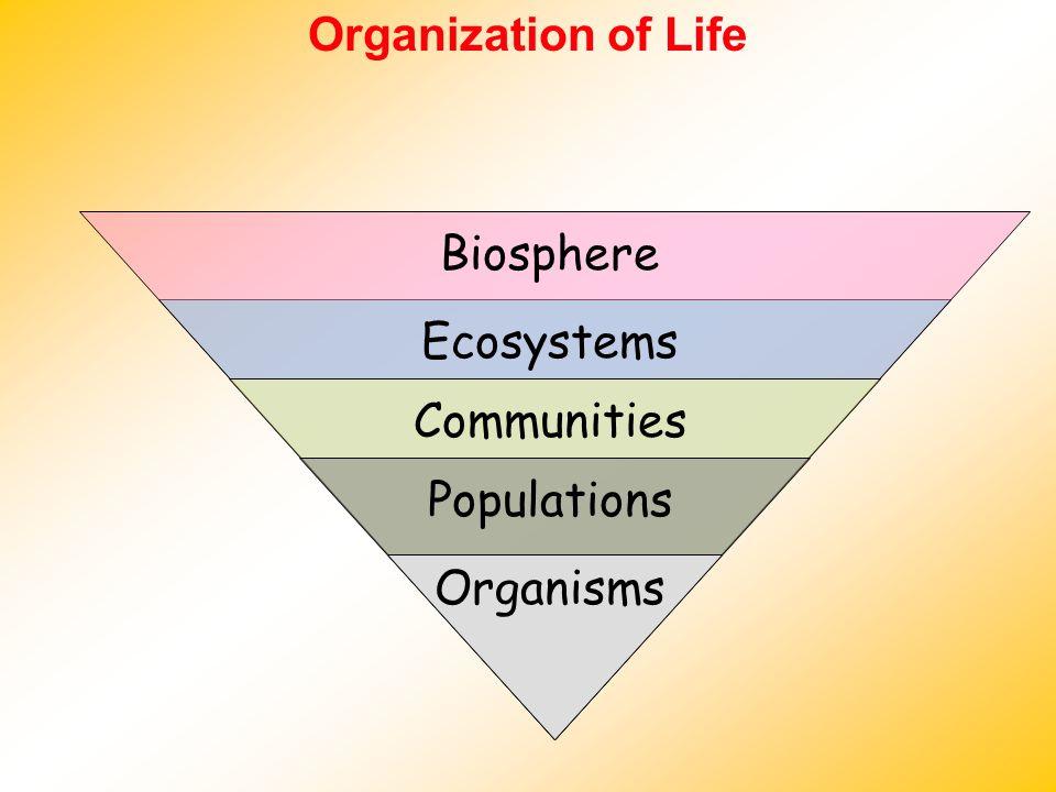 Organization of Life Biosphere Ecosystems Communities Populations Organisms
