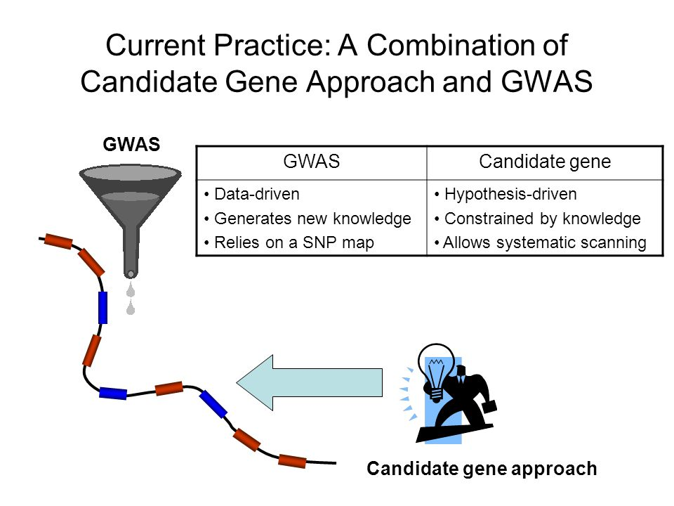 Current Practice: A Combination of Candidate Gene Approach and GWAS