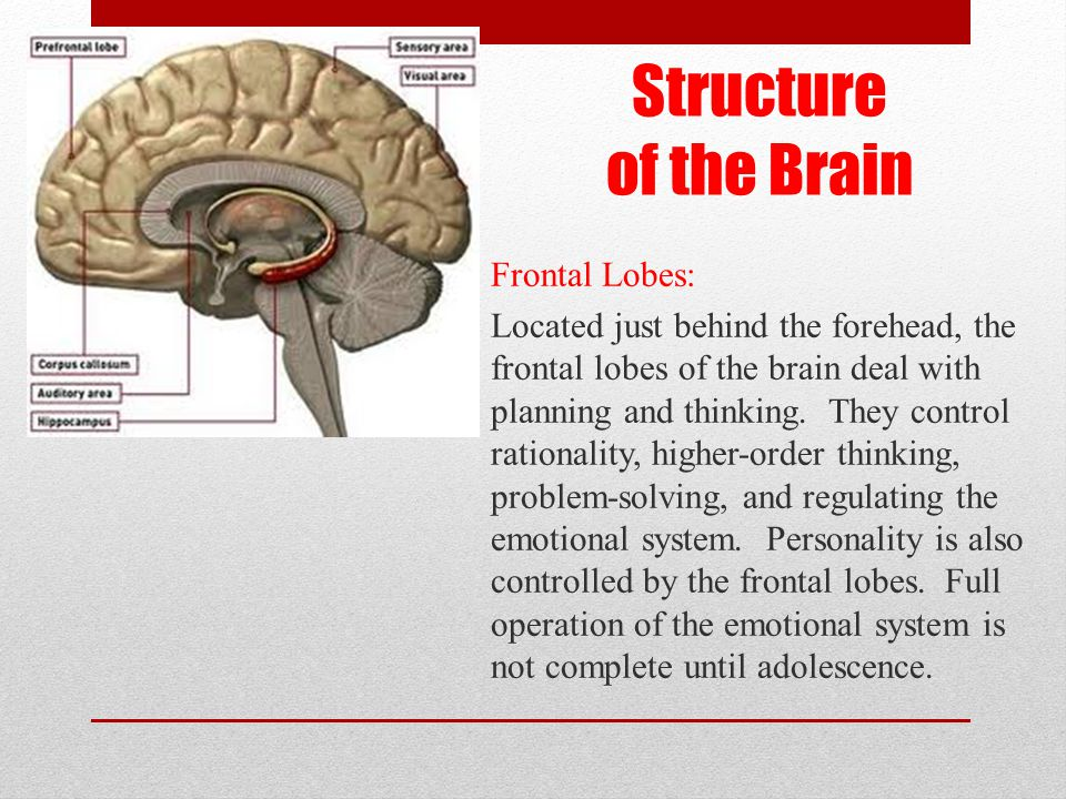 Structure of the Brain