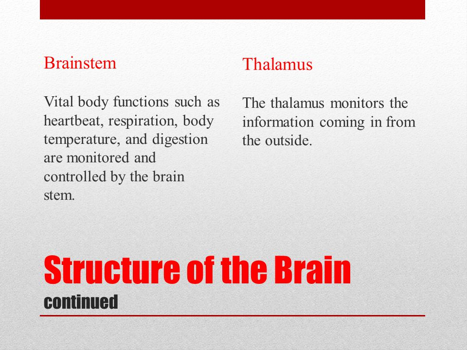 Structure of the Brain continued