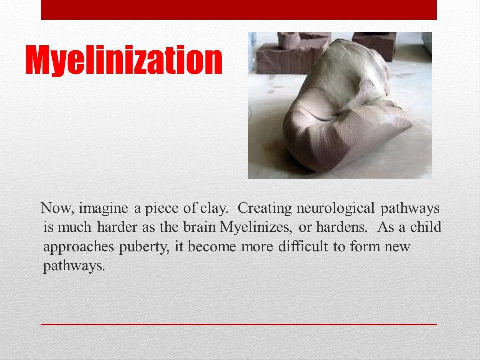 Myelinization