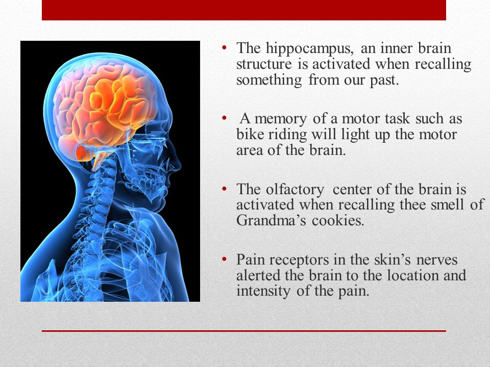 The hippocampus, an inner brain structure is activated when recalling something from our past.