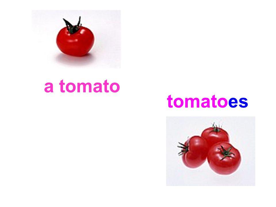 a tomato tomatoes
