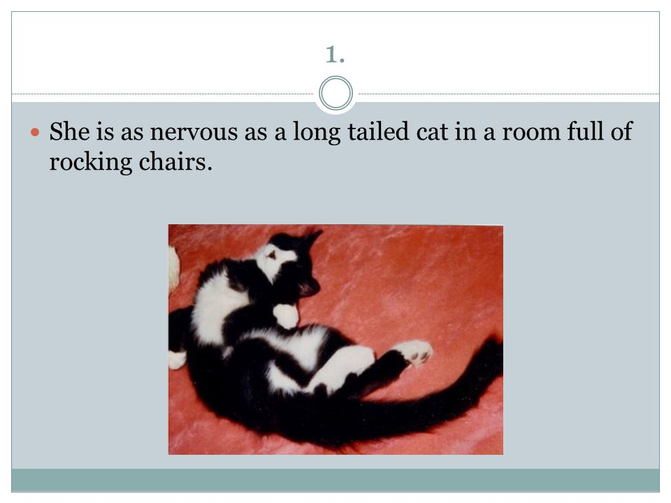 1. She is as nervous as a long tailed cat in a room full of rocking chairs.