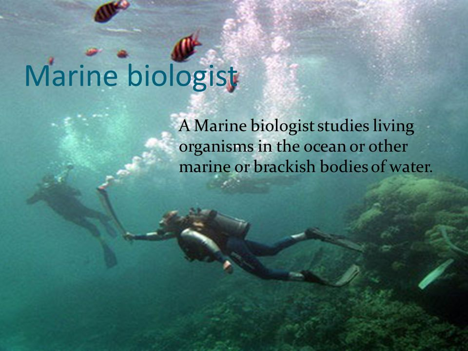 Marine biologist A Marine biologist studies living organisms in the ocean or other marine or brackish bodies of water.