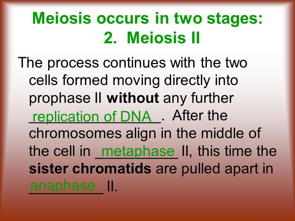 Meiosis occurs in two stages: 2. Meiosis II