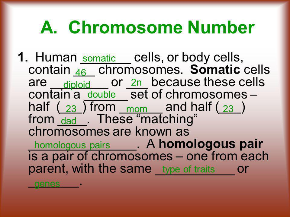 A. Chromosome Number