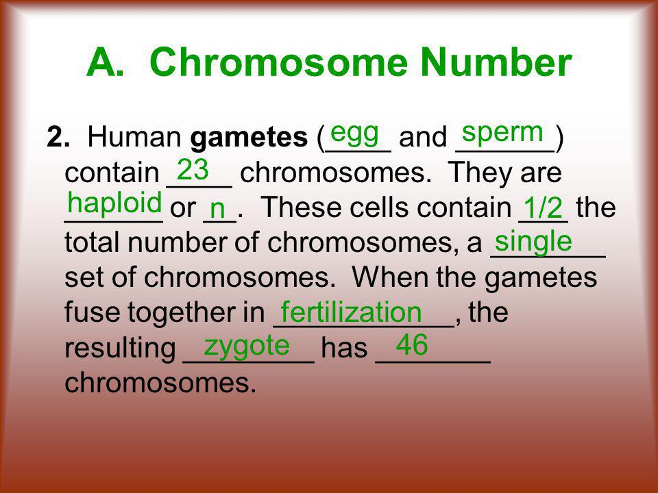 A. Chromosome Number egg sperm 23 haploid n 1/2 single fertilization