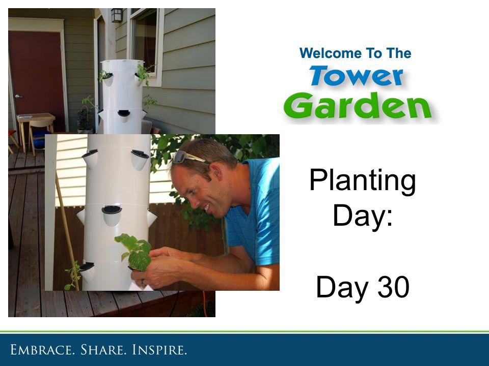 Planting Day: Day 30