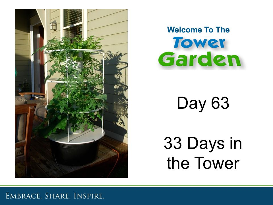 Day 63 33 Days in the Tower