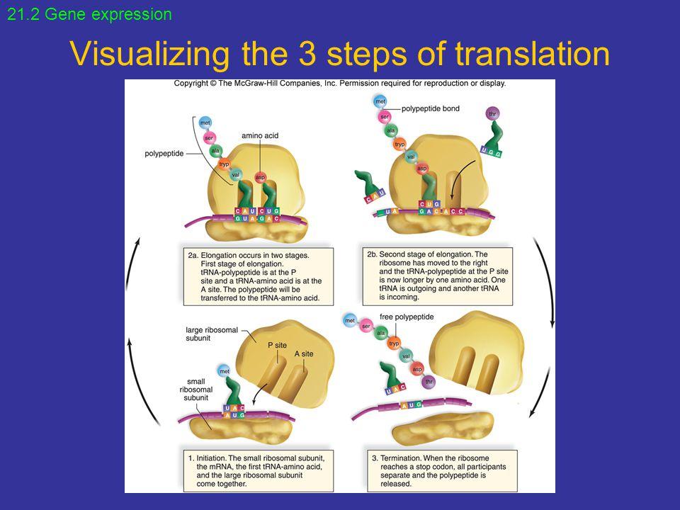 Visualizing the 3 steps of translation